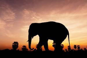 Elephant_night_time_safari.jpg