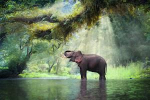 Wild_elephant.jpg