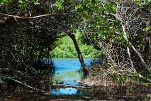 Lucayan National Park.jpg