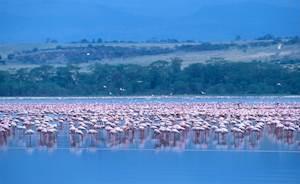 Kenya-River.jpg