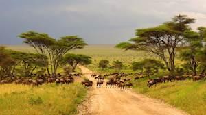 MaasaiMara-Kenya3.jpg